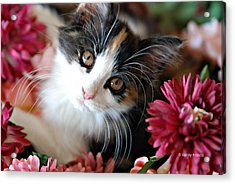 I'm Just So Adorable Acrylic Print by Kenny Francis
