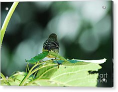 Acrylic Print featuring the photograph I'm Outta Here by Laurianna Taylor