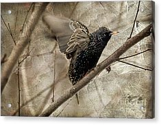 I'm Outta Here Acrylic Print by Lois Bryan