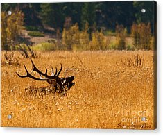 I'm Over Here Acrylic Print by Steven Reed