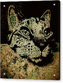 I'm Sorry To Wake You Cat Acrylic Print by Bob Gruber