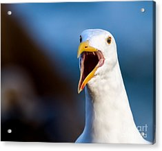I'm Talking To You Acrylic Print by Dale Nelson