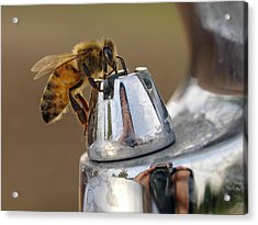 Acrylic Print featuring the photograph I'm Thirsty by Meir Ezrachi