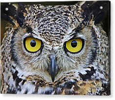 I'm Watching You Acrylic Print by Heather King