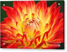 Img 0023 Flor En Rojo Detalle Acrylic Print