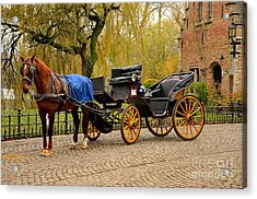 Immaculate Horse And Carriage Bruges Belgium Acrylic Print