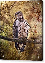 Acrylic Print featuring the digital art Immature Bald Eagle In Solitude by J Larry Walker
