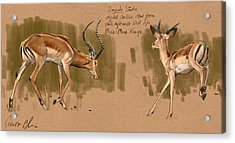 Acrylic Print featuring the digital art Impala Studdies by Aaron Blaise