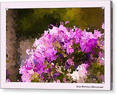 Impatiens In Oil Acrylic Print by John Holloway