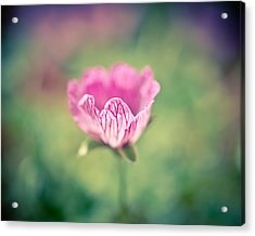 Imperfect Bloom Acrylic Print by Priya Ghose
