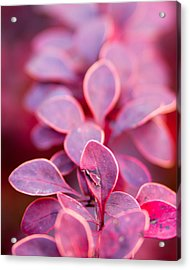 Acrylic Print featuring the photograph Imperfect by Erin Kohlenberg