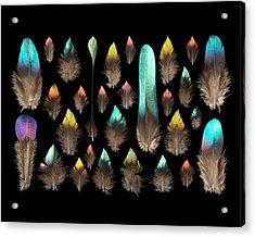 Impeyan Monal Pheasant Acrylic Print