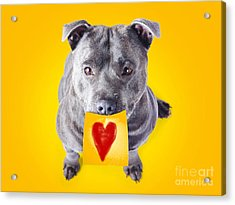 Imploring Staffie With A Sticky Note On His Mouth Acrylic Print by Jorgo Photography - Wall Art Gallery