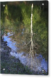 Acrylic Print featuring the photograph Impressionist Reflections by Patrice Zinck