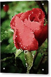 Impressionistic Rose Acrylic Print by Chris Berry