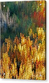 Impressionists Autumn Acrylic Print by Skip Willits