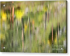 Impressions Of Autumn Acrylic Print