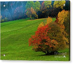 Acrylic Print featuring the photograph In A Field Of Green by Charles Lupica
