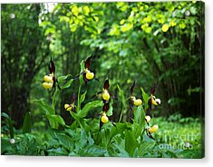 Acrylic Print featuring the photograph In A Forest Glade by Kennerth and Birgitta Kullman