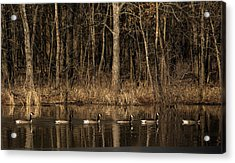 In A Row Acrylic Print
