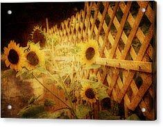Sunflowers And Lattice Acrylic Print by Toni Hopper