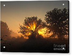 In A Silent Way Acrylic Print by Everett Houser