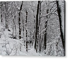 In A Winter Wonderland Acrylic Print by Bill Cannon