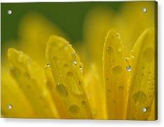 In Bloom Acrylic Print by Melanie Moraga