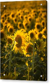 Acrylic Print featuring the photograph In Bloom by Scott Bean