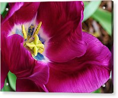 In Every Package There Is A Suprize Acrylic Print by Bruce Bley