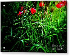 In Flanders Fields Acrylic Print by Mariana Costa Weldon
