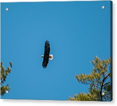 Acrylic Print featuring the photograph In Flight by Brenda Jacobs