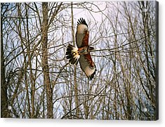 Acrylic Print featuring the photograph In Flight by David Porteus