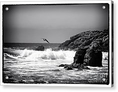 In Flight Acrylic Print by John Rizzuto
