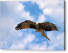 In Flight Meal Acrylic Print