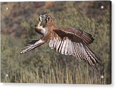 In Flight Meals Acrylic Print