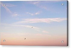 Acrylic Print featuring the photograph In Flight Over Rehoboth Bay by Pamela Hyde Wilson