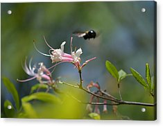 Acrylic Print featuring the photograph In Flight by Tara Potts