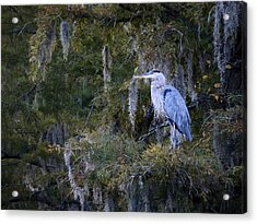 In His Element  Acrylic Print by JC Findley