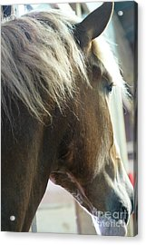 In His Farthest Wanderings Still He Sees Acrylic Print by Linda Shafer