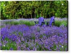 In Lavender Acrylic Print