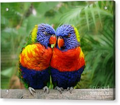 In Love Lorikeets Acrylic Print by Peggy Franz