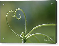 In Love With Nature Acrylic Print by Maria Ismanah Schulze-Vorberg
