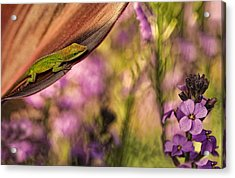 In My Garden Acrylic Print by Linda D Lester