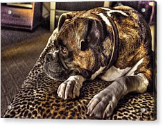 In Repose Acrylic Print by William Fields