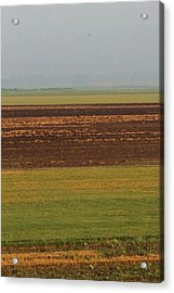 In Rows Acrylic Print by Sarah Boyd