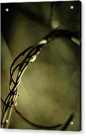 In Shadows And Light Acrylic Print by Rebecca Sherman