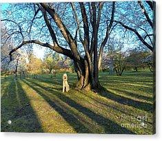 In Shadows Long He Waits Acrylic Print by Judy Via-Wolff