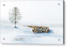 In Snow Acrylic Print