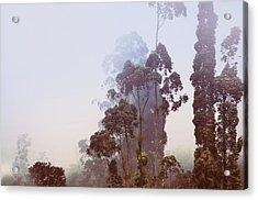 In The Blue Silence. Nuwara Eliya Acrylic Print by Jenny Rainbow